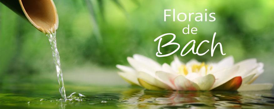 http://phloraceae.com/phloraceae/wp-content/uploads/2014/11/Phloraceae-Florais-Bach-Web.jpg